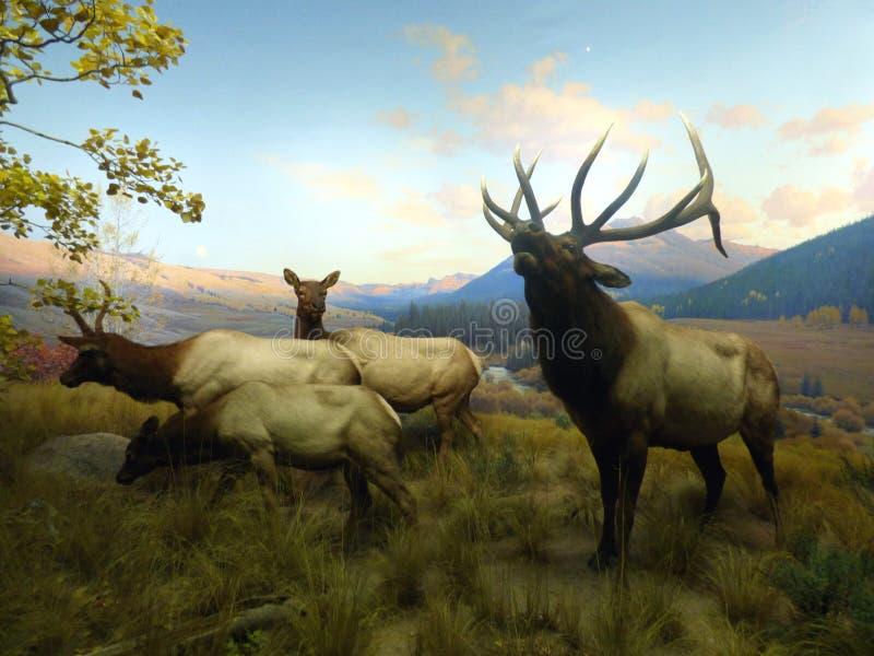 США Нью-Йорк американский музей истории естественный стоковое фото rf