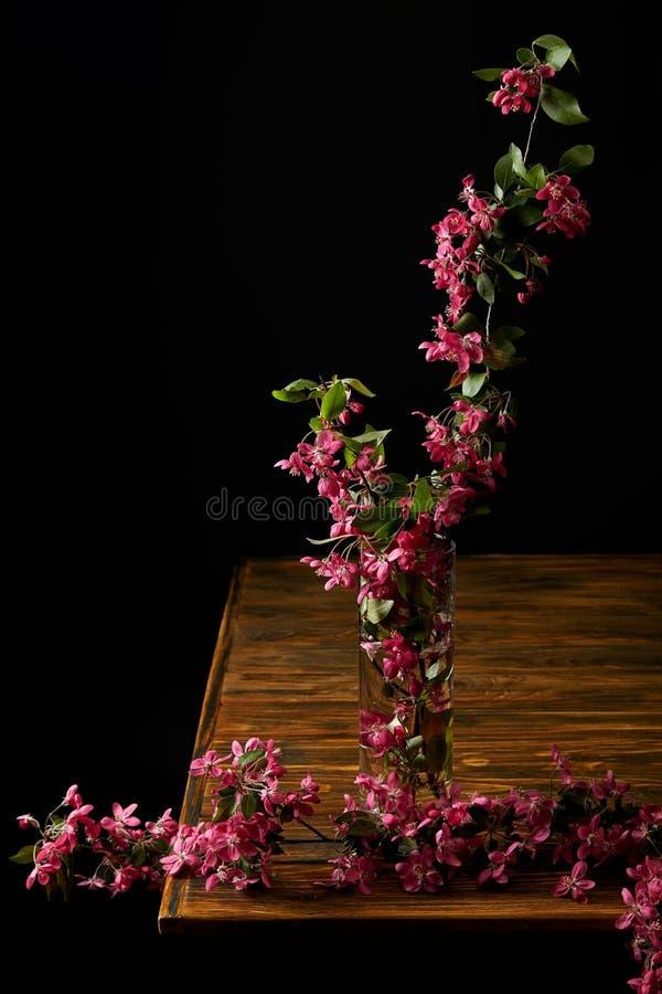 съемка конца-вверх ветви розового вишневого цвета в вазе изолированной на черноте стоковое фото