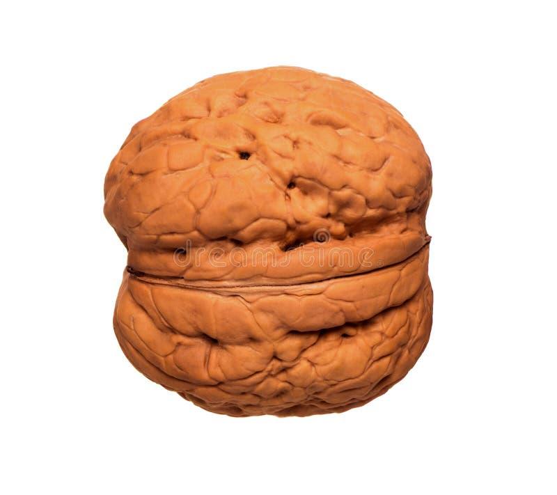 Съемка крайности близкая поднимающая вверх грецкого ореха изолированная на белизне, сырцовой здоровой еде, грецком орехе inshell стоковые фото
