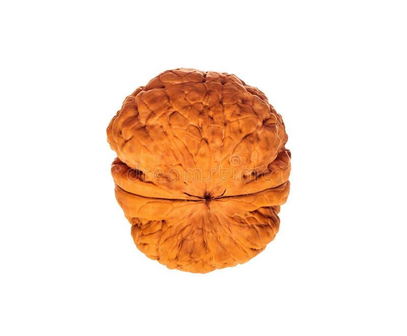 Съемка крайности близкая поднимающая вверх грецкого ореха изолированная на белизне, сырцовой здоровой еде, грецком орехе inshell стоковые изображения rf