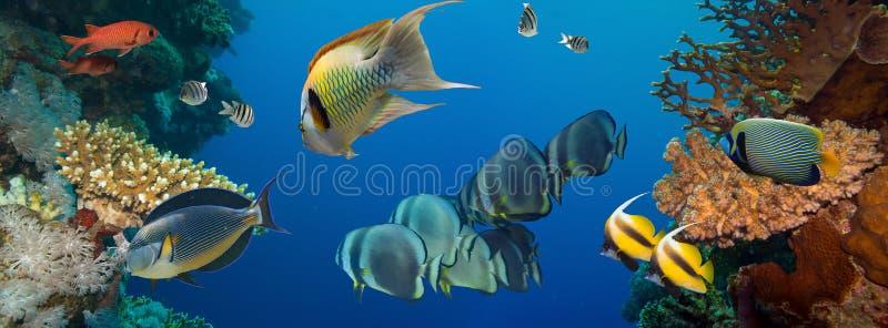 Download съемка Красного Моря рыб коралла Стоковое Фото - изображение насчитывающей египет, океан: 40587864