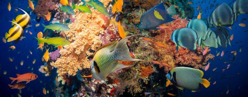 Download съемка Красного Моря рыб коралла Стоковое Фото - изображение насчитывающей египет, bluets: 41663074