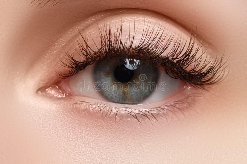 Съемка макроса глаза женщины красивого с весьма длинными ресницами Сексуальный взгляд, чувственный взгляд Женский глаз с длинними стоковые фотографии rf