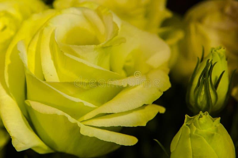 Съемка макроса цветков - поднял стоковое фото rf