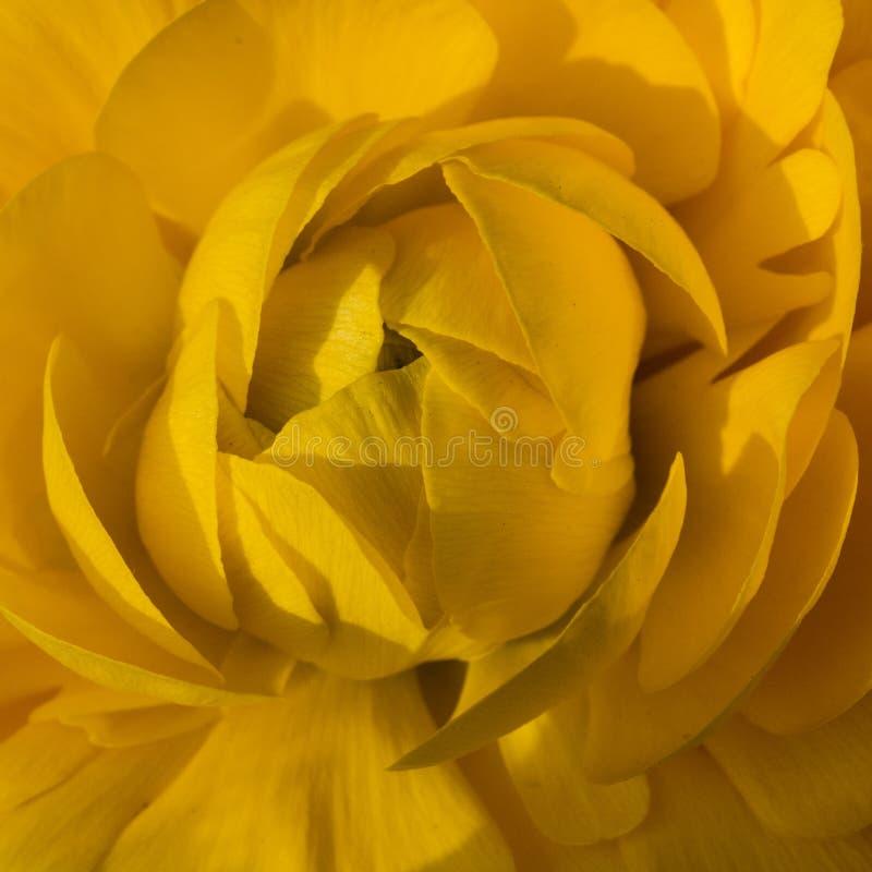 Съемка макроса цветков - поднял стоковая фотография