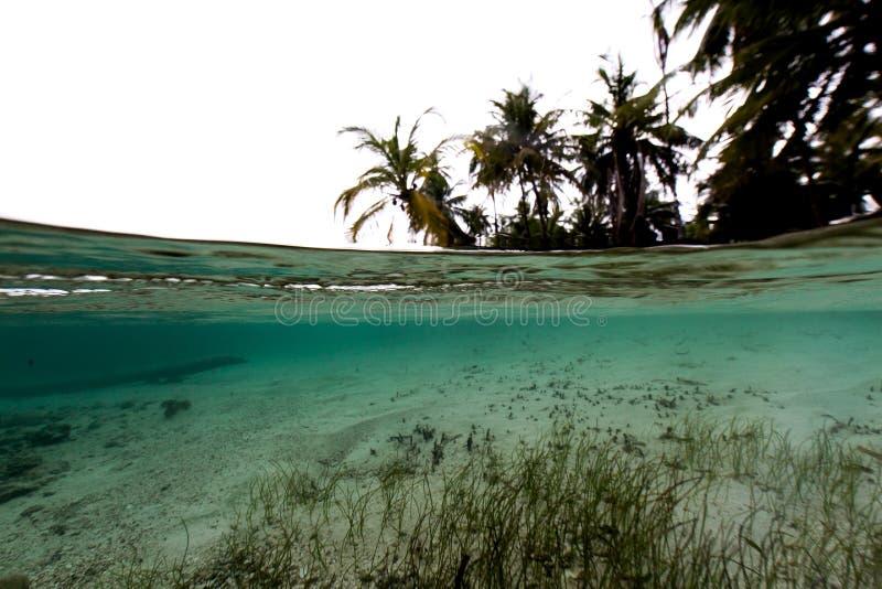 Съемка разделенная пальмами стоковая фотография