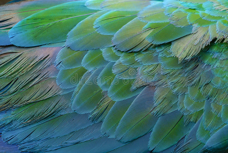 съемка macaw головки голубого зеленого цвета стоковое изображение rf