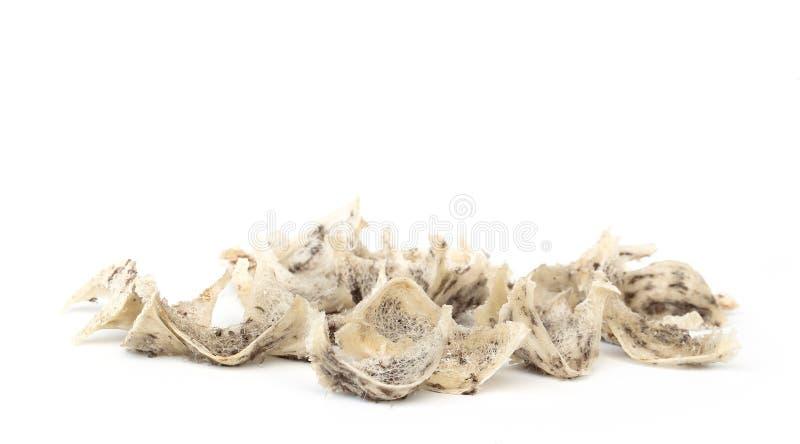 Съестное гнездй птицы стоковое изображение rf