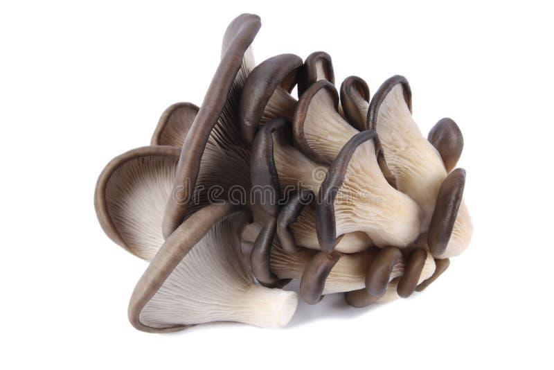 съестной гриб грибков стоковые изображения rf
