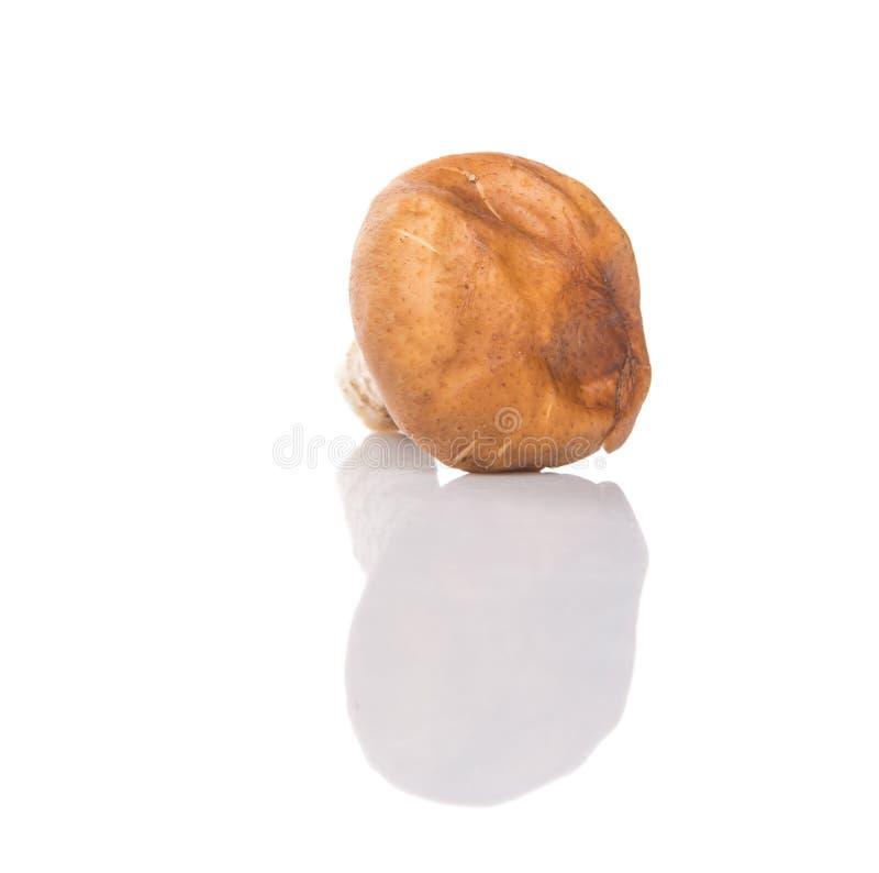 Съестной гриб IV стоковая фотография