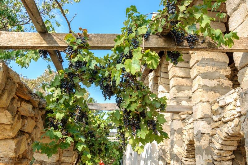 Съестные виноградины сплетены на каменной стене стоковая фотография