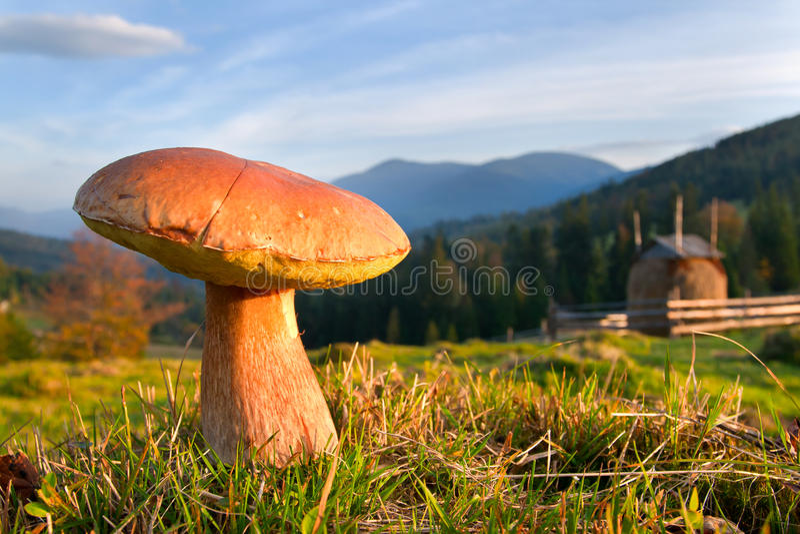 съестные грибки стоковые фото