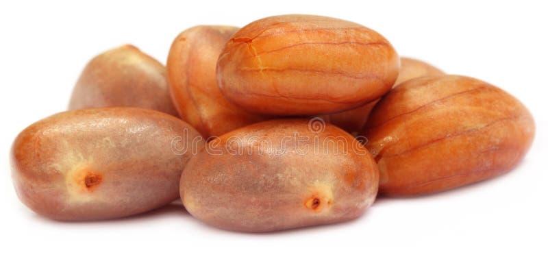 Съестные семена jackfruit стоковое фото rf