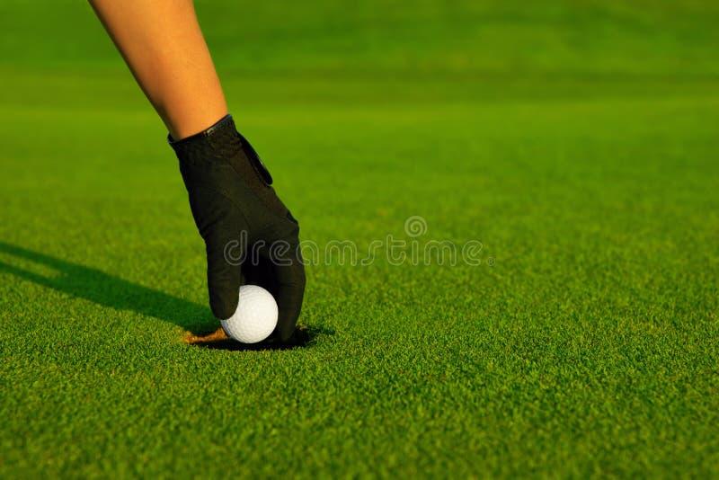 Сыграйте в гольф, рука игрока в гольф восстанавливая шарик в отверстии стоковая фотография