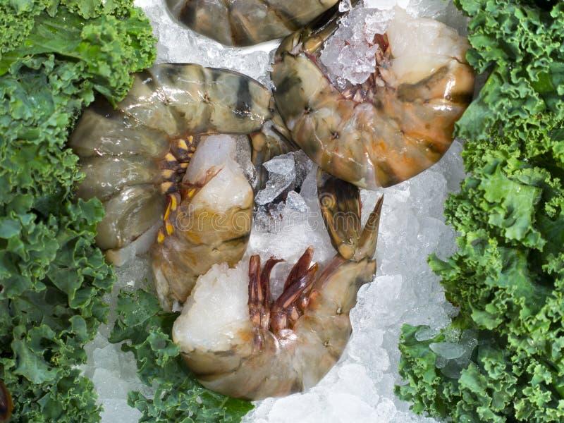 Сырая слон креветка на льде на рынке с зеленым гарниром стоковые фотографии rf
