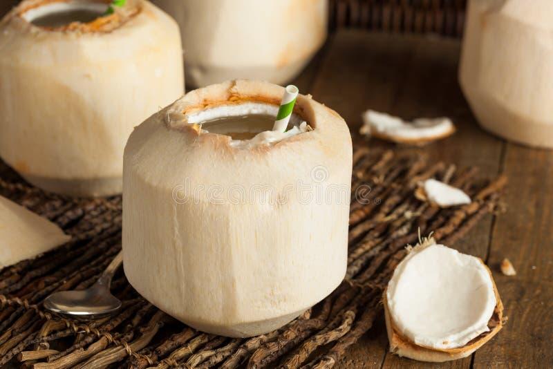 Сырцовое белое молодое питье кокоса стоковая фотография rf