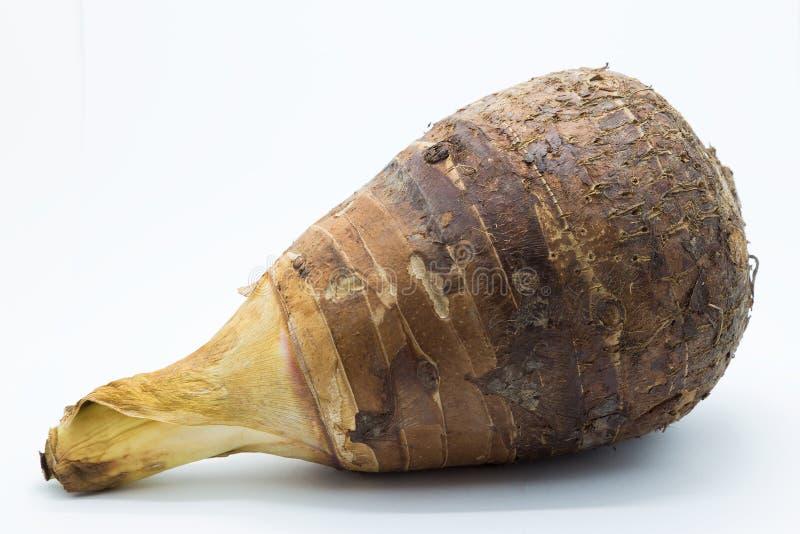 Сырцовое свежее таро корня на белой предпосылке стоковые изображения