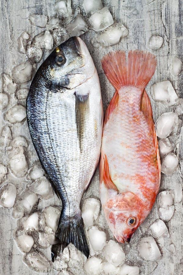 Сырцовое свежее dorada и красная тилапия удят на льде продукты моря предпосылки кулинарные salmon Взгляд сверху, натюрморт стоковое фото rf
