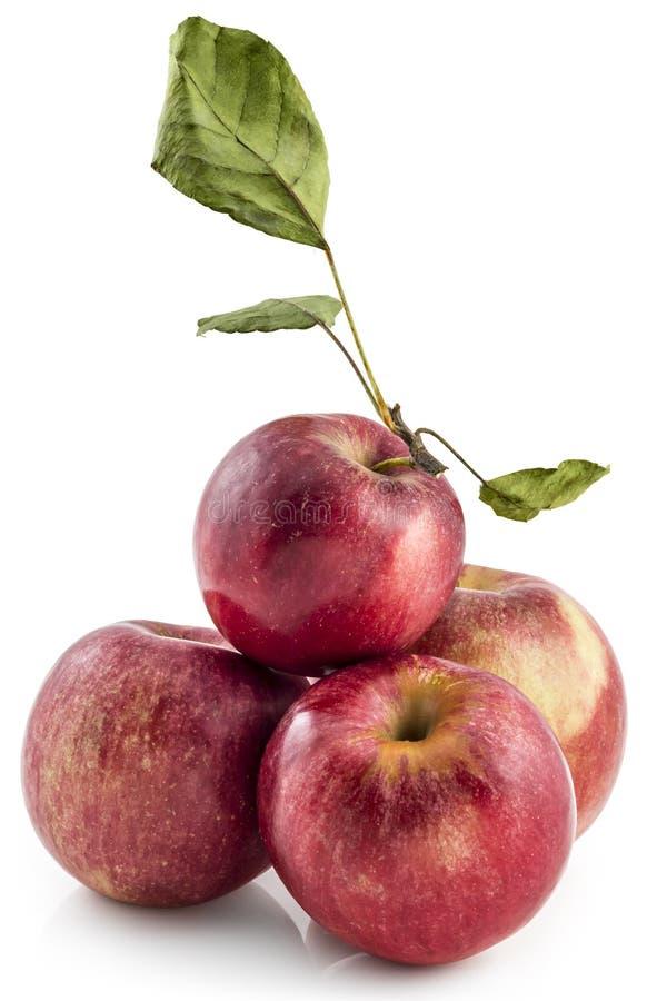 Сырцовое яблоко jonathan Серба стоковые изображения rf