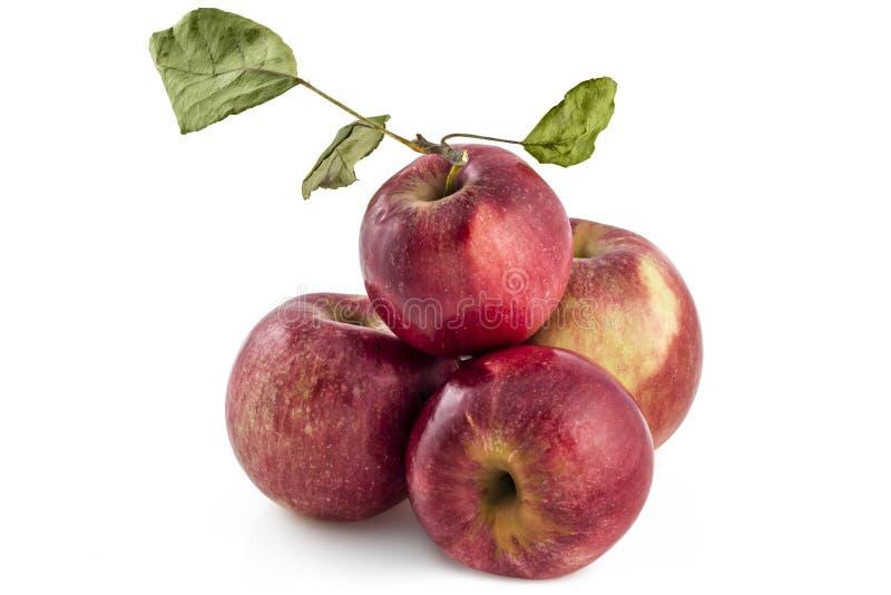 Сырцовое яблоко jonathan Серба стоковые фотографии rf