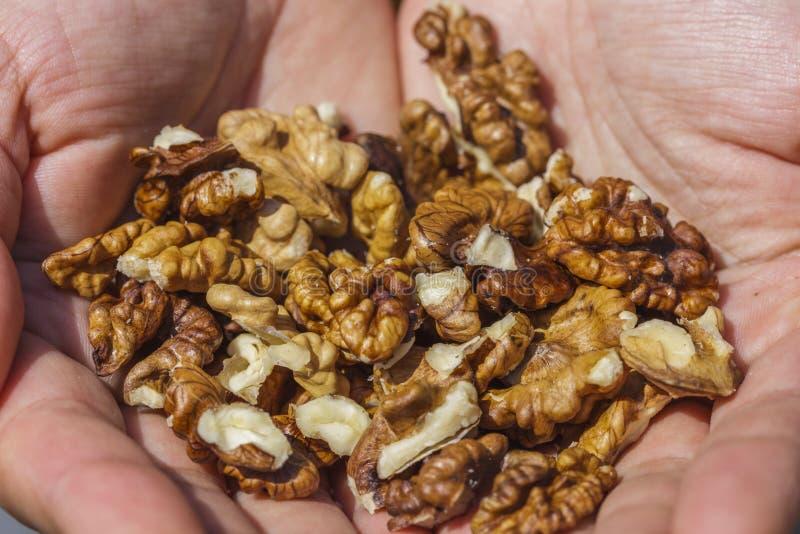 Сырцовые грецкие орехи стоковая фотография rf