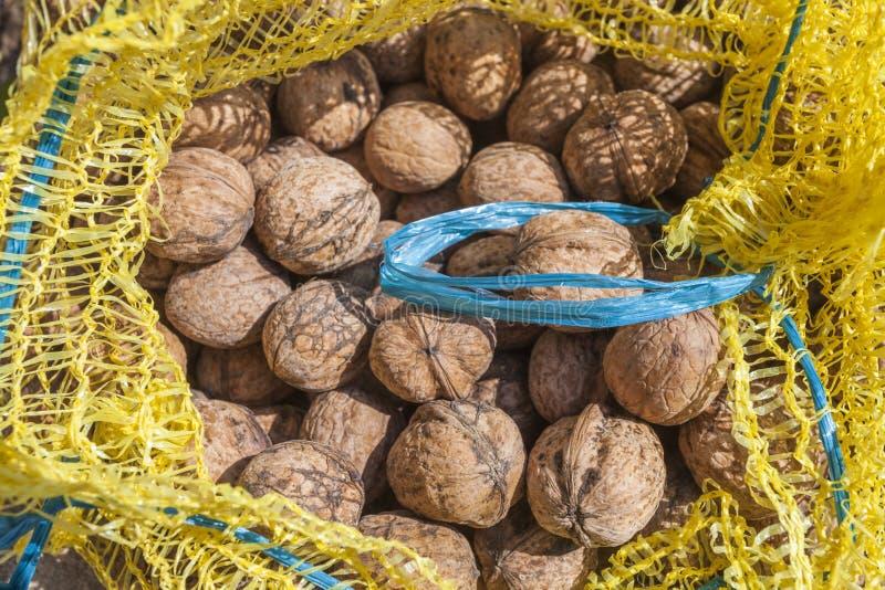 Сырцовые грецкие орехи стоковые фото