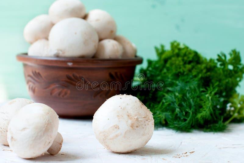 Сырцовые грибы с петрушкой и укропом стоковое фото rf