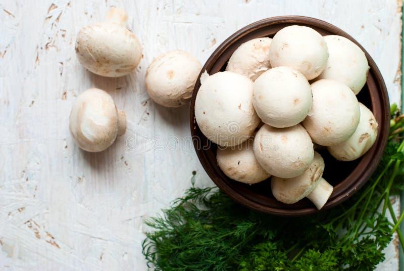 Сырцовые грибы с петрушкой и укропом стоковое фото