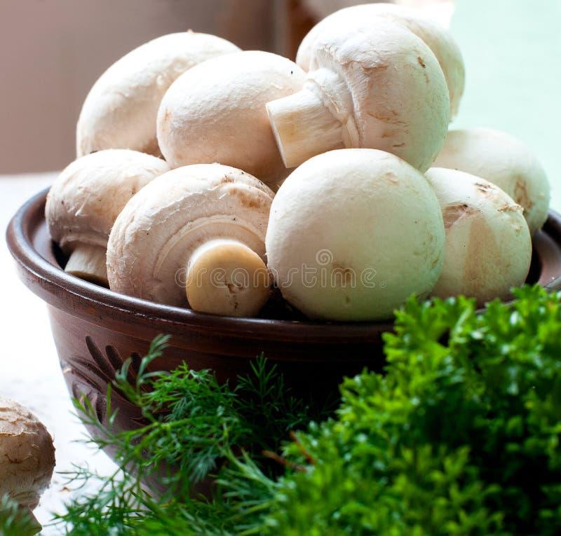 Сырцовые грибы с петрушкой и укропом стоковые фото