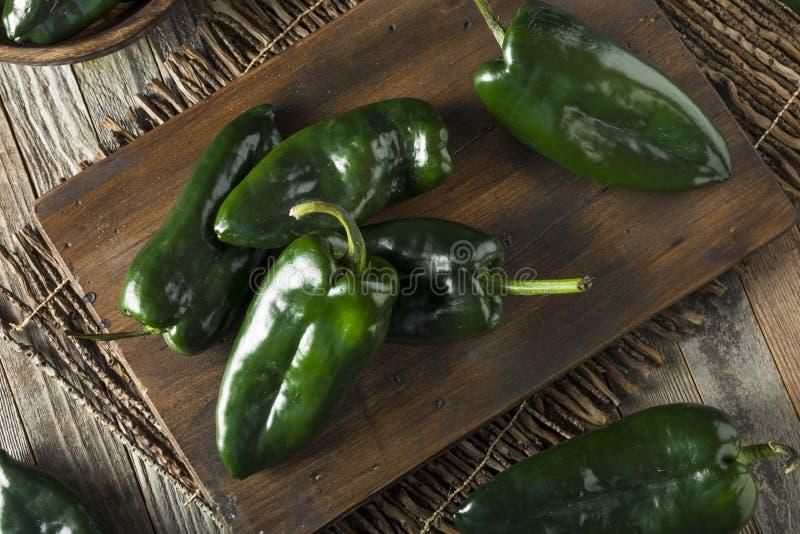 Сырцовые зеленые органические перцы Poblano стоковое фото rf