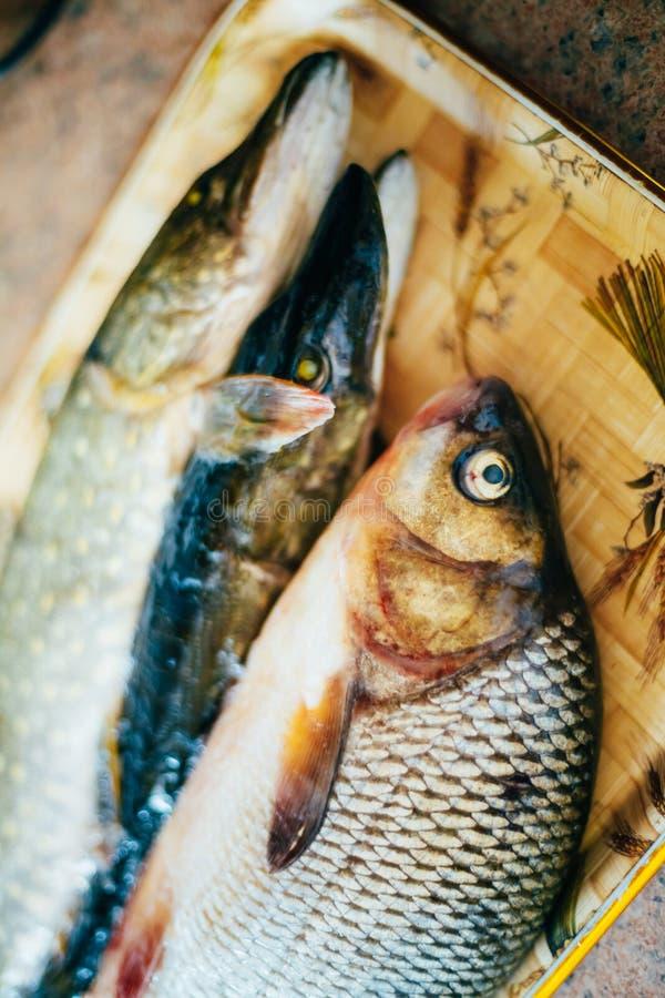 Сырцовые карп и щуки пресноводной рыбы лежат на стоковые фотографии rf
