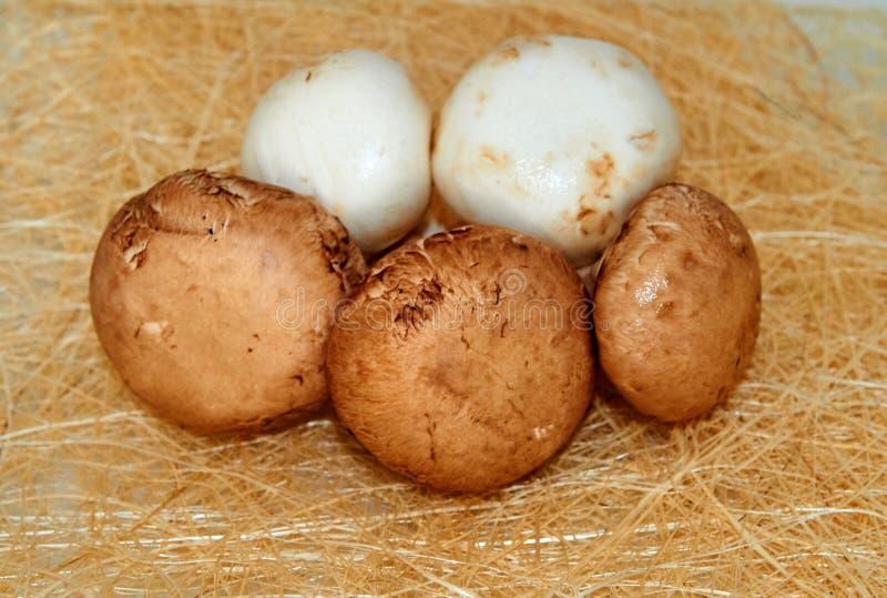 Сырцовые коричневые и белые грибы стоковое фото