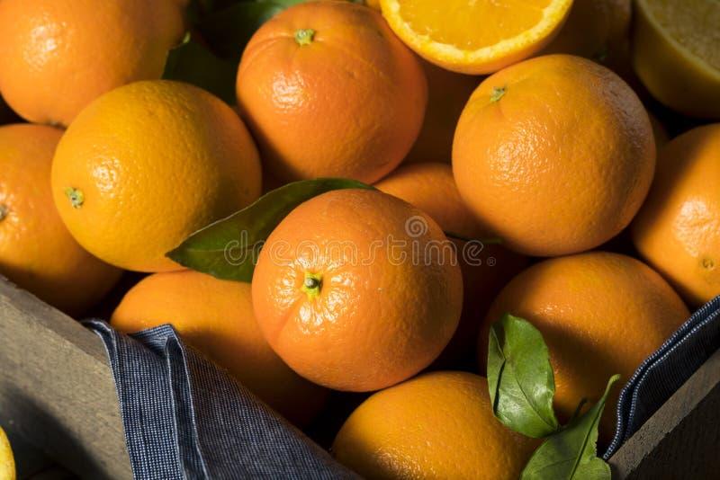 Сырцовые органические оранжевые апельсины стоковое фото