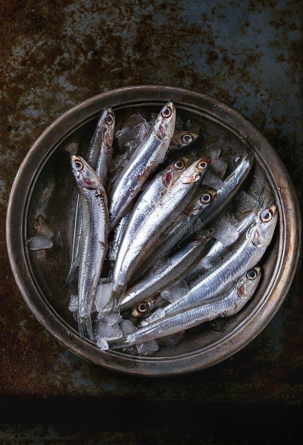 Сырцовые свежие рыбы камс стоковые фотографии rf