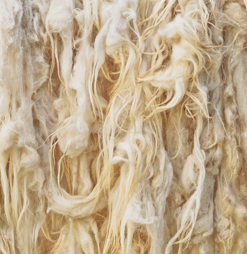сырцовые шерсти стоковое изображение