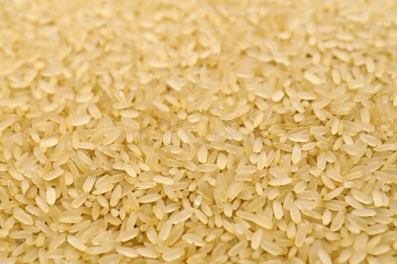 Сырцовый крупный план зерен риса стоковая фотография