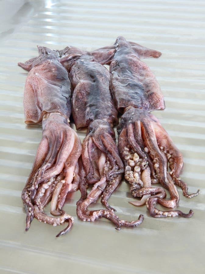 3 сырцовых кальмара на кухонном столе металла стоковые фото