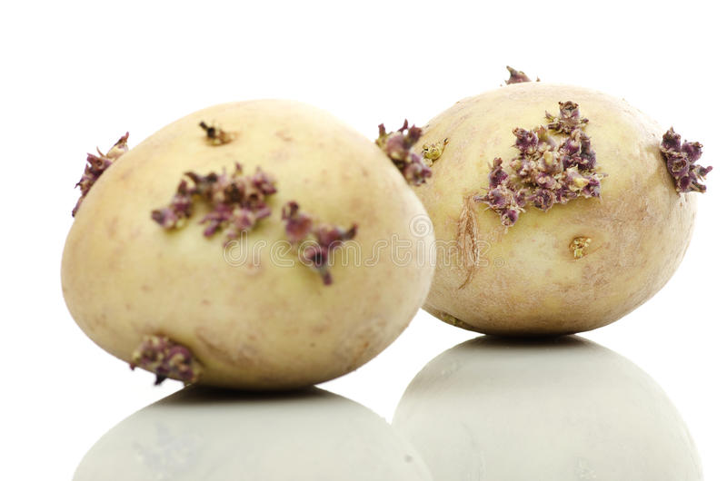 Сырые картошки на белой предпосылке стоковая фотография rf