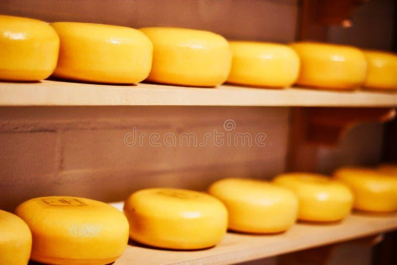 Сыр, голландское гауда стоковое фото