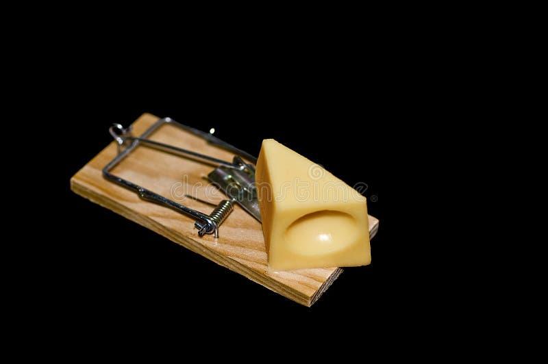 Сыр на ловушке мыши стоковая фотография rf