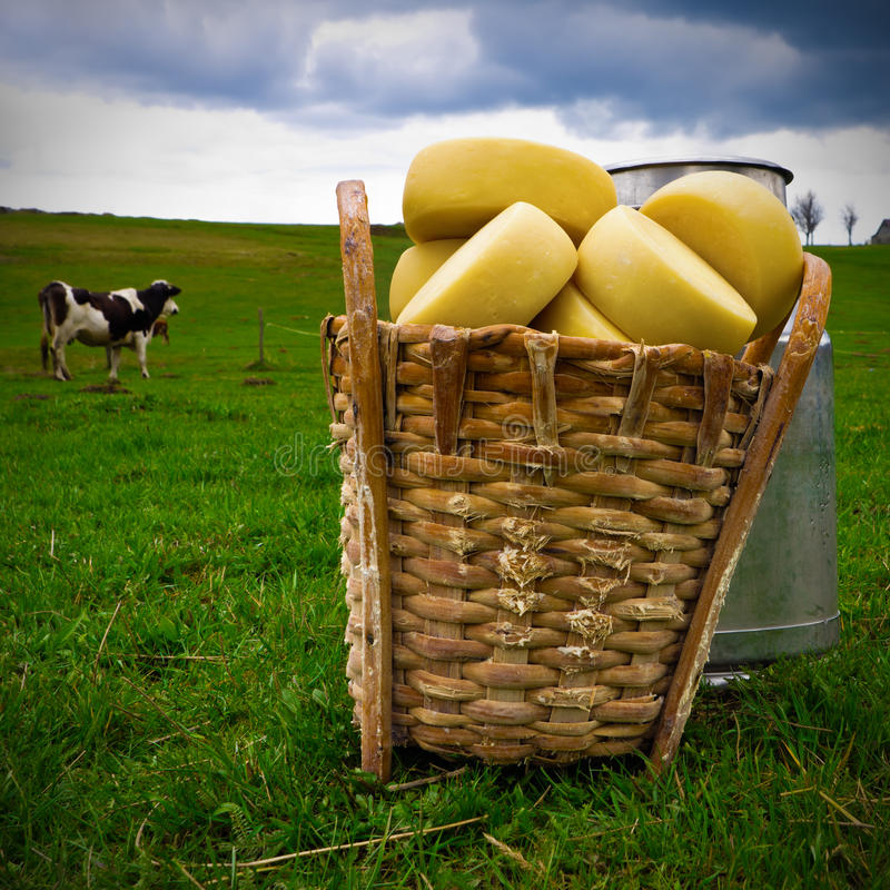 сыр трудный стоковая фотография