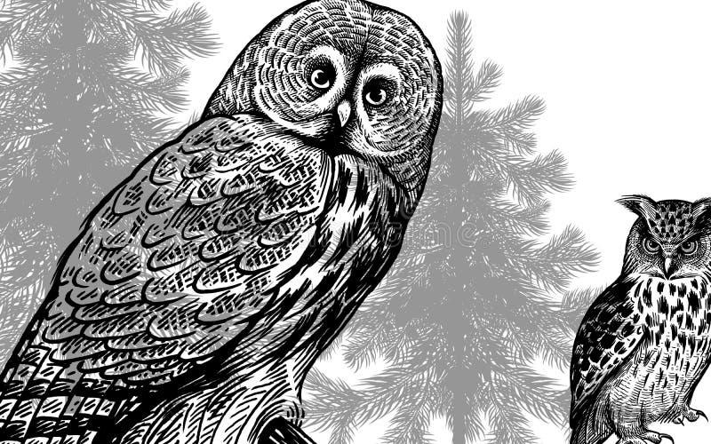 Сычи и ели леса Черно-белый плакат иллюстрация вектора