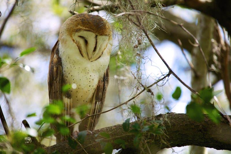 Сыч в дереве стоковое фото