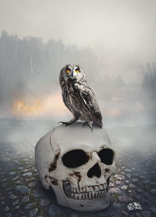 Сыч на черепе Сцена хеллоуина мистическая стоковое фото rf