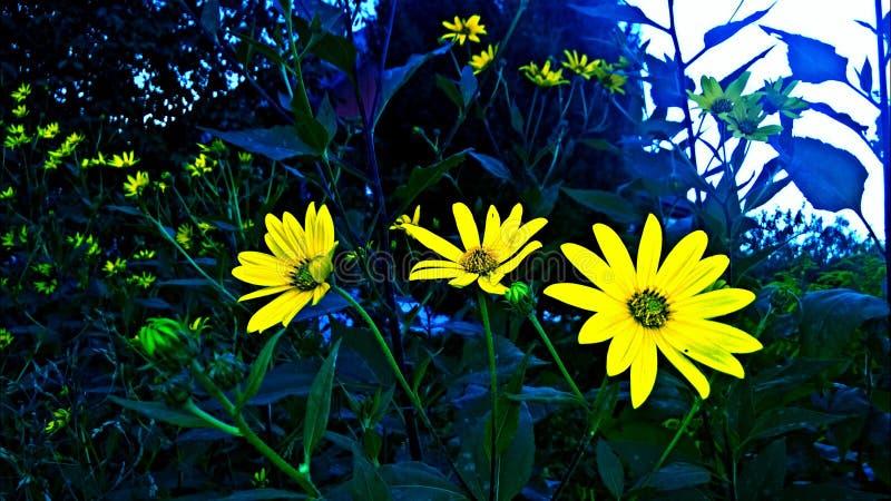 Сь цветки стоковые фотографии rf