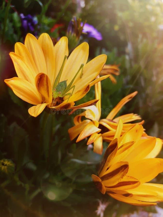 Сюрприз внутри цветка Красота everywher Оно только требует, что терпеливый глаз видит его Видящ что красота может изменить нашу м стоковая фотография