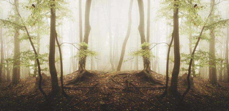 Сюрреалистический лес с туманом и зеленой листвой стоковая фотография