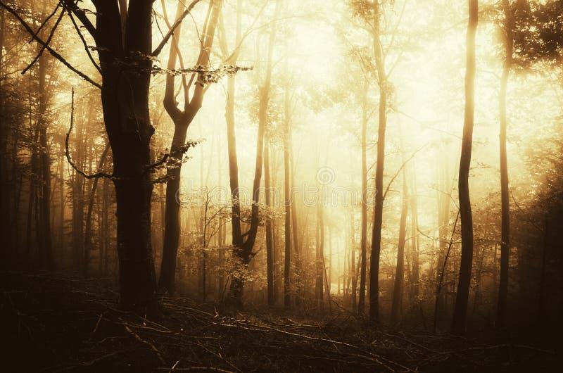 Сюрреалистический туманный лес на заходе солнца стоковые изображения