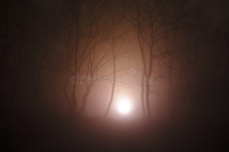 Сюрреалистический свет в темном лесе, волшебная фантазия освещает в fairy туманном лесе стоковое изображение rf