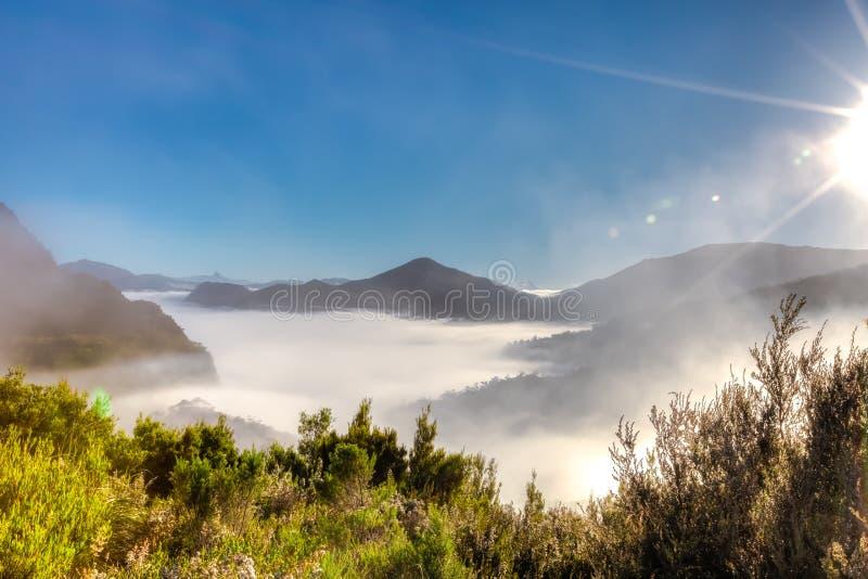 Сюрреалистический туман утра стоковые фотографии rf
